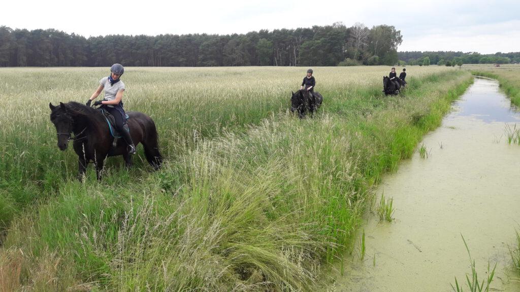 Ausritt um Spreenhagen für Erwachsene auf Friesenpferden